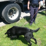 Drug dogs like to play too!